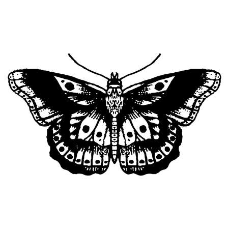 Moth silhouette. Hand Vector Illustration. isolated on white background. Vectores