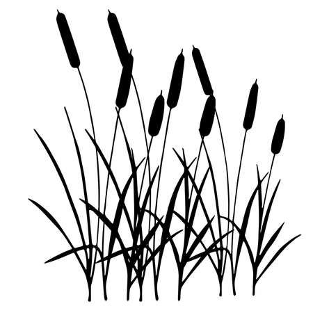 vector silhouette of the reed isolated on white background.