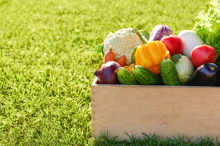 wooden box or crate full of freshly harvested vegetables in on a green grass background. Harvest a garden. Gardening and healthy food concept. Copy space Stock Photo