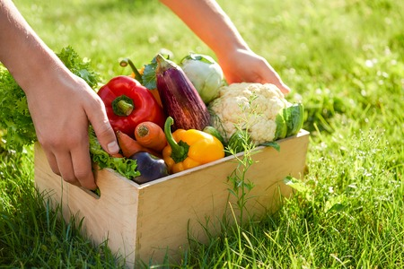 man holds wooden box or crate full of freshly harvested vegetables. Green grass background. Harvest a garden. Gardening and healthy food concept. Copy space
