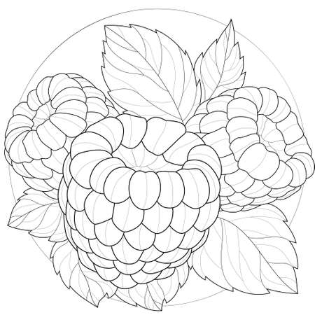 Raspberries.Coloring book antistress for children and adults. Outline style. Black and white drawing Illustration