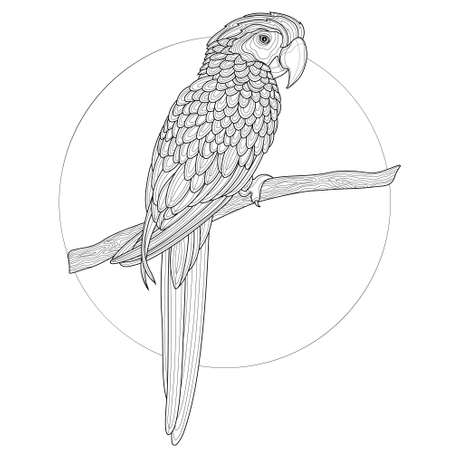 Parrot Bird.Coloring book anti-stress design for children and adults. Illustration isolated on white background.Black and white drawing. 向量圖像