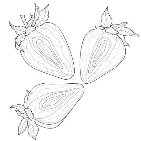 Strawberry. Berry.Coloring book antistress for children and adults. Zen-tangle style.Black and white drawing