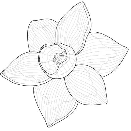 Daffodil flower.Coloring book antistress for children and adults. Illustration isolated on white background.Zen-tangle style.