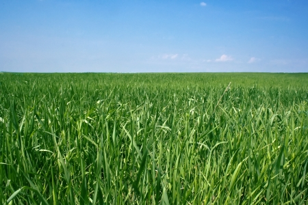 spring grass close-up on a green meadow against the blue sky Stock Photo - 18247966