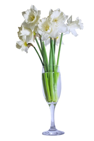 bouquet of daffodils in a glass isolated on white photo