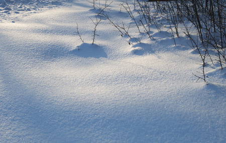 snowdrifts: branches bush look out from snowdrifts Stock Photo