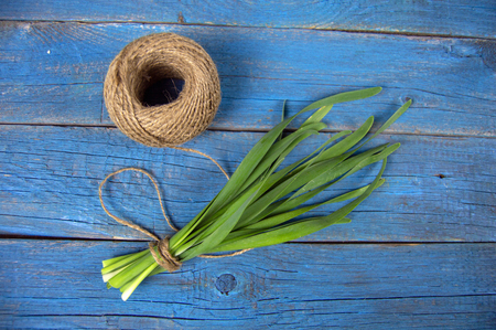 a bunch of green onions tied with string and a hank of threads lay on an old blue wooden background Stock Photo