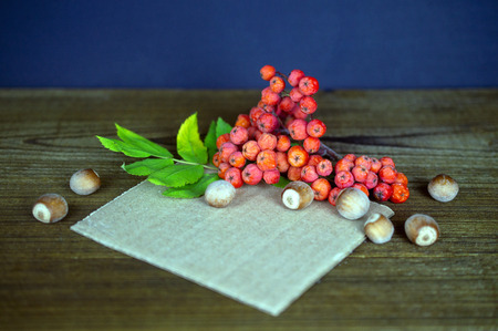 Composition with rowan berries and hazelnuts on wooden backgroun 写真素材