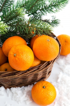 Fresh tangerine in a basket with  spruce branch  photo