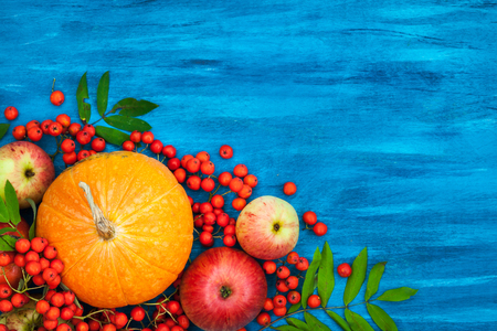 rowanberry: Autumnal still life with pumpkins, apples and rowanberry on blue, top view, copy space Stock Photo