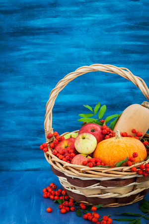 Autumnal still life with pumpkins, apples and rowanberry in a basket on blue wooden background