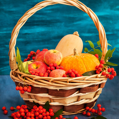 rowanberry: Autumnal still life with pumpkins, apples and rowanberry in a basket on blue wooden background