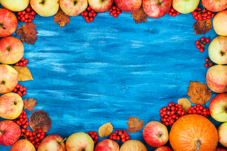 painted wood: Autumnal frame red apples, pumpkin, rowan on  painted blue wooden background with copy space for text in center, top view