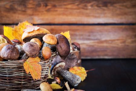Autumnal wild forest edible mushrooms (boletus) in basket