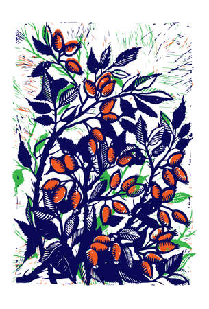 Vector mage of rose hips hand drawing. Linocut rosehip. Picture of a dog rose. Linocut orange rose.