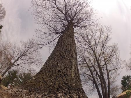 towering: Towering Tree