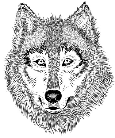 Vector hand drawn black and white portrait of furry wolf on white background. Animal detailed sketch good for print or advertising design.