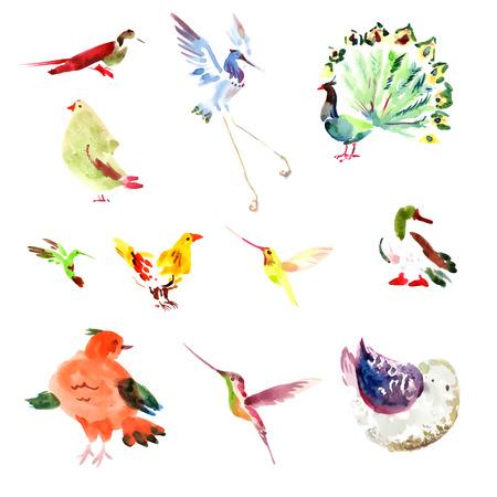 Acquerello mano uccello disegnato impostato su sfondo bianco. Vector uccello raccolta isolato su sfondo bianco.