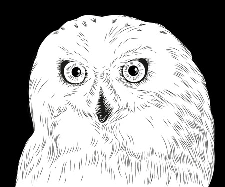 Vector hand drawn white vector portrait of black and white owl isolated on black background. Good fog print design.