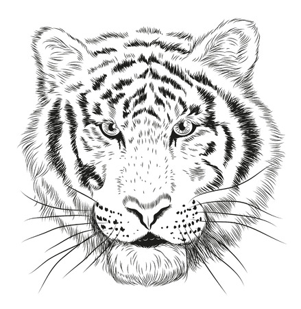 nose close up: Hand drawn vector graphic black and white portrait of tiger head.