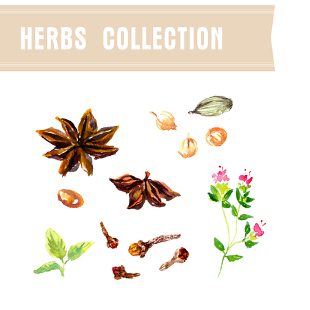 Vector collection of watercolor herbs on white background. Иллюстрация