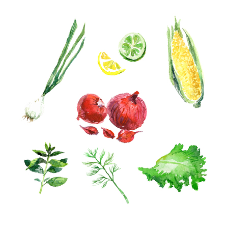leaf illustration: Vector collection of watercolor herbs on white background. Illustration
