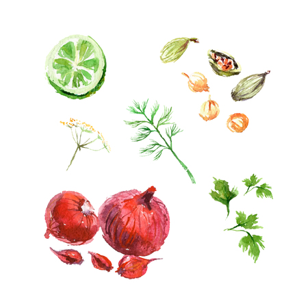 potherb: Vector collection of watercolor herbs on white background. Illustration