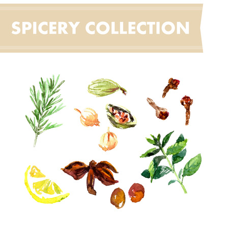 chive: Vector collection of watercolor herbs on white background. Illustration