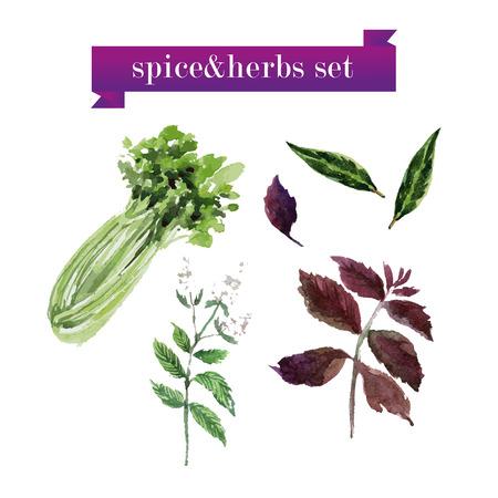 ベクトルは、白い背景の水彩画の新鮮な野菜のセット。生鮮食品の図。雑誌や本の記事、ポスター デザイン、レストラン メニュー テンプレートに