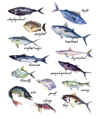 escamas de peces: Colecci�n de la acuarela mano dibuja peces en el fondo blanco. Bueno para la revista, men� o la ilustraci�n de libros, dise�o de impresi�n, todo el dise�o gr�fico.