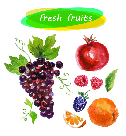 Vector set of watercolor fruits on white background. Fresh food illustration. Good for magazine and book articles, poster design, restaurant menu template.
