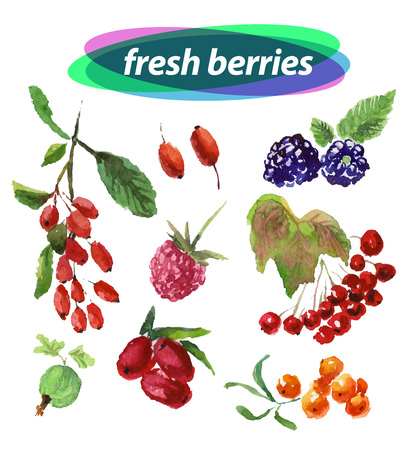 dewberry: Vector set of watercolor berries elements on white background. Cute illustration is good for magazine or book, poster and card design, menu cover.