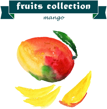 mango slice: Vector set of watercolor mango elements on white background. Cute illustration is good for magazine or book, poster and card design, menu cover.