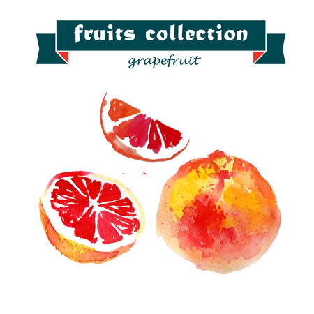 grapefruit juice: Vector set of watercolor grapefruit elements on white background. Cute illustration is good for magazine or book, poster and card design, menu cover. Illustration