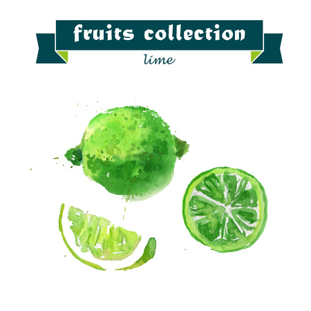 lime: Vector set of watercolor lime elements on white background. Cute illustration is good for magazine or book, poster and card design, menu cover. Illustration