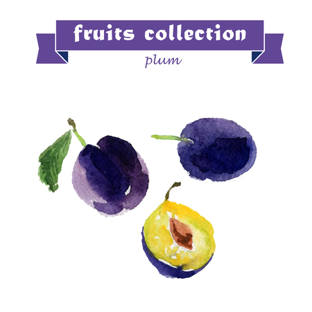 prune: Vector set of watercolor plum elements on white background. Cute illustration is good for magazine or book, poster and card design, menu cover.