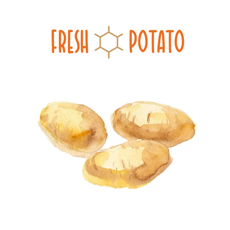 Vector set of watercolor potatoes elements on white background. Cute illustration is good for magazine or book, poster and card design, menu cover.