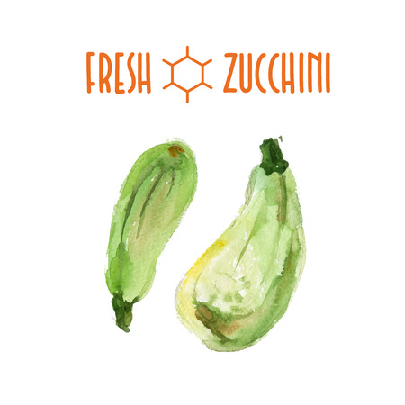 courgette: Vector set of watercolor zucchini elements on white background. Cute illustration is good for magazine or book, poster and card design, menu cover.