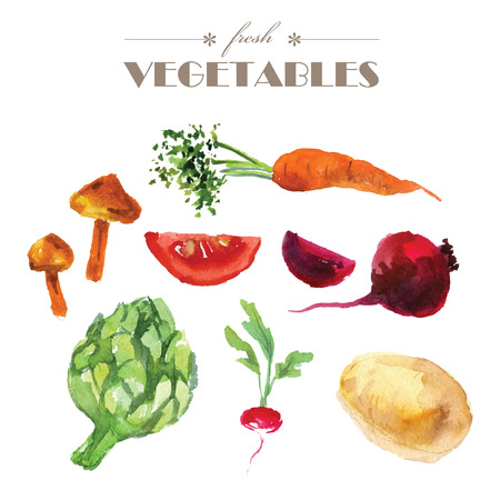 articles: Vector set of watercolor fresh vegetables on white background. Fresh food illustration. Good for magazine and book articles, poster design, restaurant menu template.