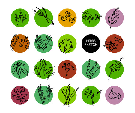 salvia: Vector hand drawn fruits sketch. Artistic and flat food illustration. Good for magazine, book or article illustration, graphic print design.