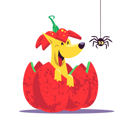 Vector flat cartoon illustration with Halloween dog character sitting in red pumpkin laughing with little spider. Good for celebration card, party invitation, sticker, flayer design. Illustration