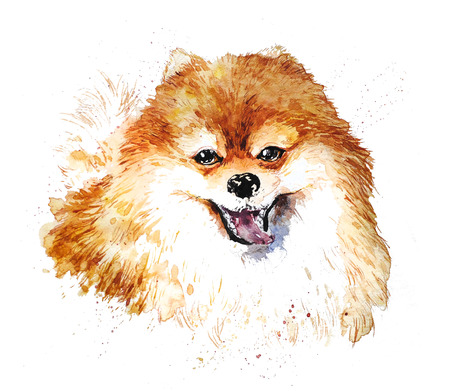 Watercolor artistic orange dog portrait isolated on white background. Cute pet animal head hand drawn. Pomeranian puppy. New Year symbol, christmas card, xmas emblem.