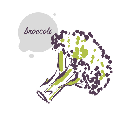 Vector hand drawn illustration of fresh raw broccoli vegetable isolated on white background. Sketch style. Healthy food element. Good for menu, banner, packaging design etc. Illustration