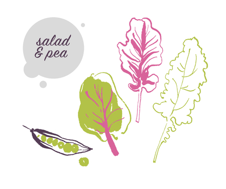 Vector hand drawn illustration of fresh raw pea and salad leaves vegetable isolated on white background. Sketch style. Healthy food element. Good for menu, banner, packaging design etc. Illustration