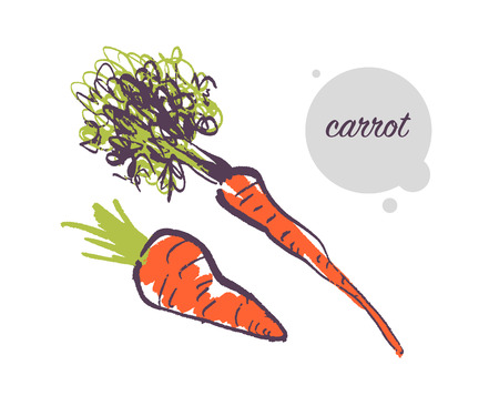 Vector hand drawn illustration of fresh raw carrot vegetable isolated on white background. Sketch style. Healthy food element. Good for menu, banner, packaging design etc.