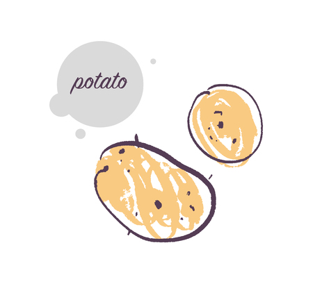 Vector hand drawn illustration of fresh raw potato vegetable isolated on white background. Sketch style. Healthy food element. Good for menu, banner, packaging design etc.