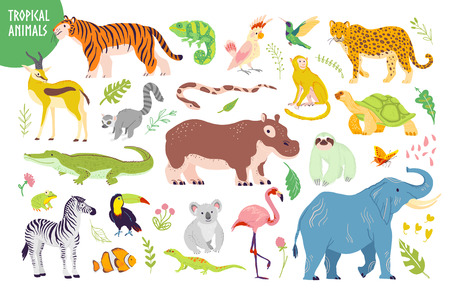 Vector set of flat hand drawn tropical animals, birds, reptiles, plants isolated on white background: tiger, zebra, koala, alligator, flamingo. For children alphabet, print, tag, illustration etc. Illustration