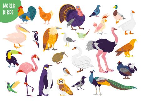 Vector conjunto de tipos de aves del mundo dibujados a mano planos aislados sobre fondo blanco. Gallo, pavo, gaviota, loro, flamenco y otros. Para libro infantil, ilustración del alfabeto, impresión, logotipo del zoológico, pancarta. Logos