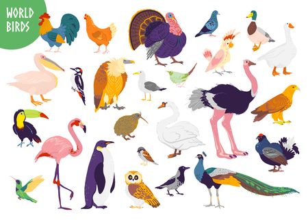 Vector set of flat hand drawn world birds kinds isolated on white background. Rooster, turkey, seagull, parrot, flamingo and others. For children book, alphabet illustration, print, zoo logo, banner.